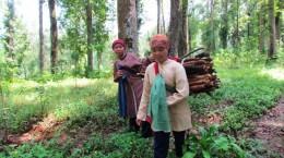 pencari kayu bakar warga-sekitar hutan pendidikan gunung walat