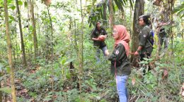 Praktik Lapangan Fakultas Kehutanan Universitas Nusa Bangsa (UNB) Bogor