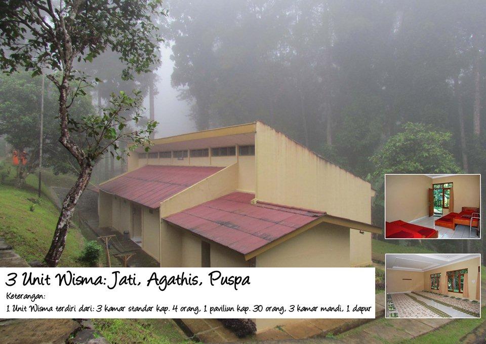 Wisma Jati, Agathis, Puspa