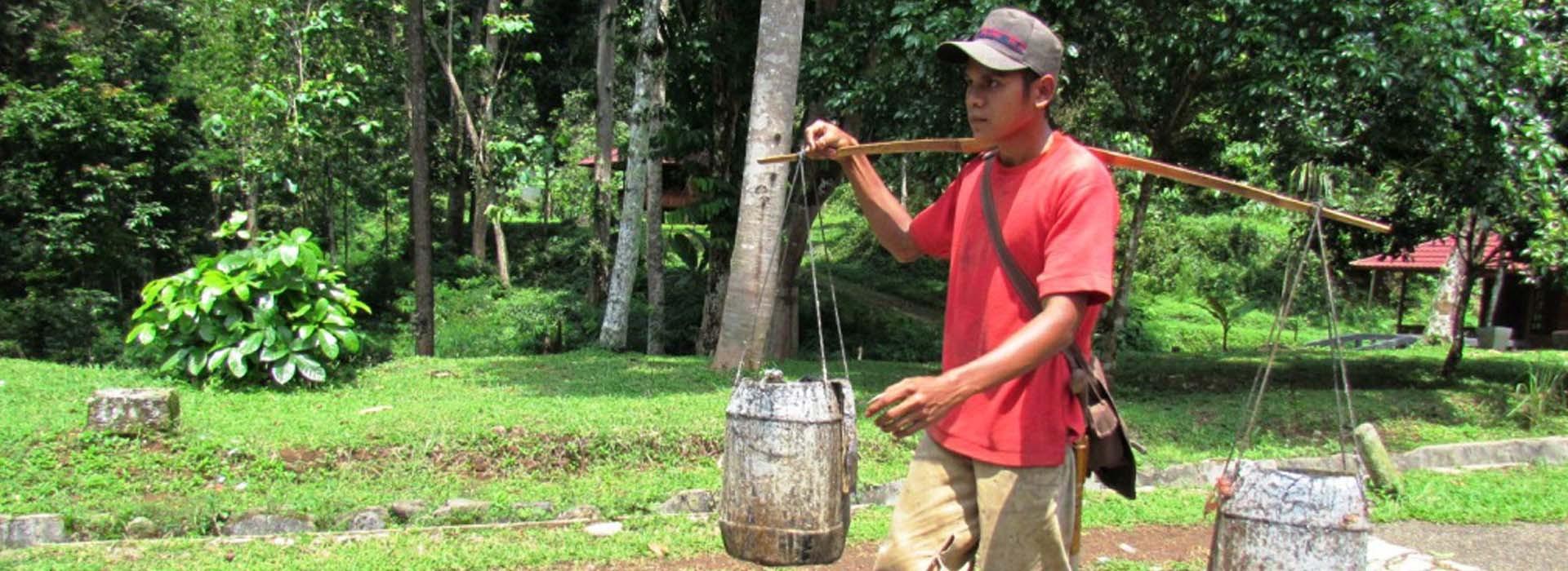 penyadap hutan pendidikan gunung walat