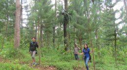 Peninjauan tanaman voluntary carbon trading oleh ConocoPhillips Indonesia, Ltd