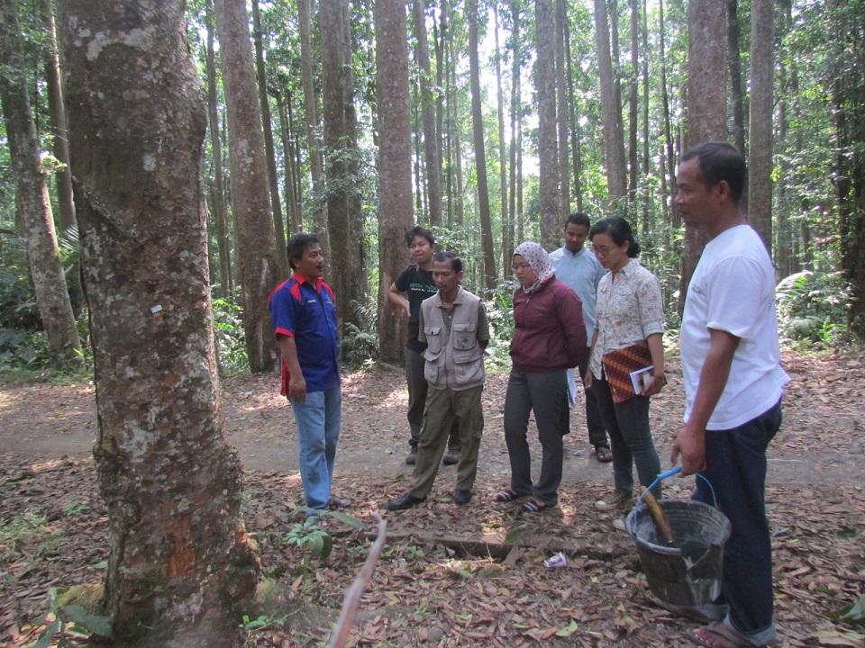 Studi banding produksi getah agathis oleh Pegawai Balai Besar Taman Nasional Gunung Gede Pangrango Sukabumi