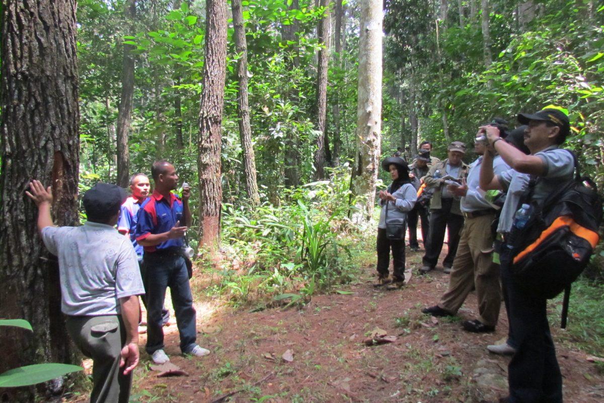 Praktik Rehabilitasi dan Kreativitas Pengembangan Produksi Hasil Hutan oleh Pusdiklat Kehutanan Bogor